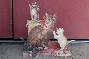 Playful Kittens Stand-Up 3D Pop Out Greeting Card