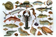 Reproduction Chromolithograph Embossed Die-Cut Scrap Reliefs - Ocean Fish
