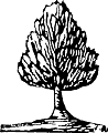 Ancient Tree Rubber Stamp