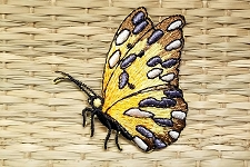 Breathtaking Butterfly Applique