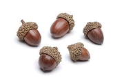 Package of 5 Natural Acorns