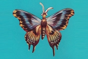 Die Cut Butterfly (Blue)