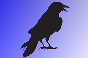 Large Black Crow Silhouette Decal