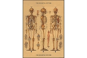 1 Sheet of Skeleton Giftwrap Paper