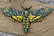 Intricately Detailed Laser-Cut Death's Head Moth