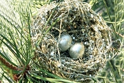 Silvery Nest and Eggs Ornament