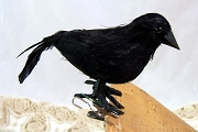 High Quality Black Feathered Crow or Raven Clip Ornament