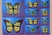 Art Postcard: 3D Lenticular Stickers: BUTTERFLIES