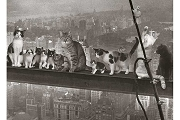 Art Postcard: Cats over New York City