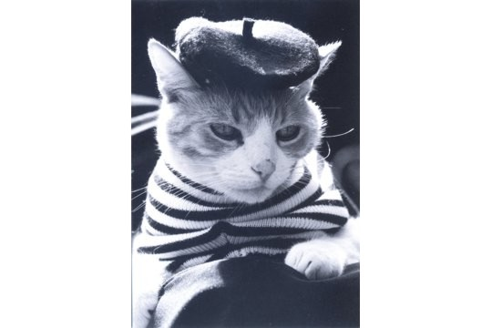 Art Postcard - French Kitty - Jacques Kati