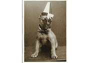 Art Postcard by Unidentified Photographer - Untitled, c 1900 (Petey the Clown Dog)