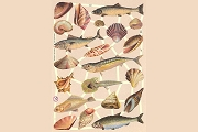 SCRAPS - Reproduction Chromolithograph Embossed Die-Cut Reliefs - Fish & Shells