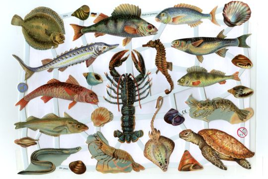 Ocean Fish Reproduction Chromolithograph Embossed Die-Cut Scrap Reliefs