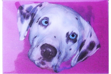 Lenticular Dalmatian Enclosure Card