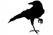 Standing Black Crow Decal