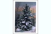 Tree in Winter Enclosure Card
