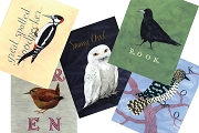 Box of 20 Bird Note Cards
