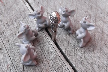 Little Gray Singing Mouse