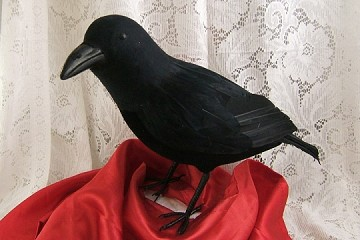 Large Crow with Real Feathers