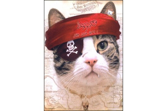 Captain Miaow Art Postcard