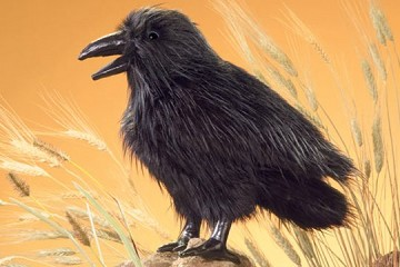Large Raven or Crow Puppet