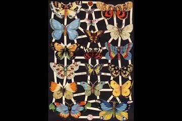 Reproduction Chromolithograph Embossed Die-Cut Scrap Reliefs - New Butterflies