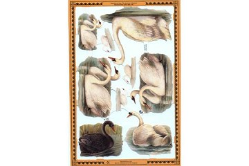 SCRAPS - Reproduction Chromolithograph Embossed Die-Cut Relief - Swans